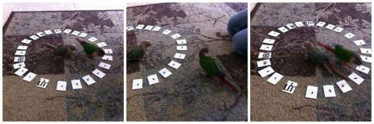Birds_Trio